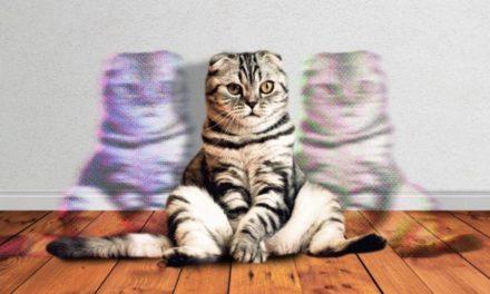 Amazon Basics: Copy Cat, Ponyhof & Kindergarten um ›Everyday Sling‹